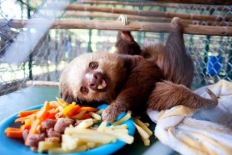 Ζώα σε απίστευτες φωτογραφίες 08