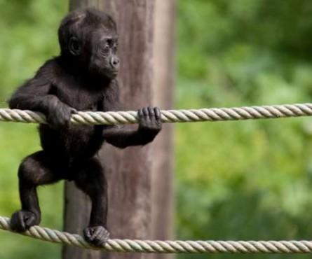 Ζώα σε απίστευτες φωτογραφίες 09