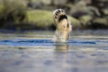 Ζώα σε απίστευτες φωτογραφίες 22