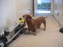 """Σκύλος παίζει μόνος του """"πιάσε τη μπάλα"""""""