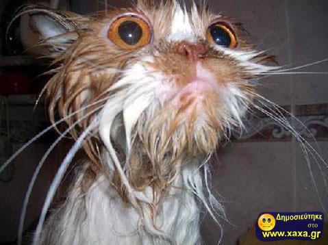 Πως να κάνετε μπάνιο την γάτα σας