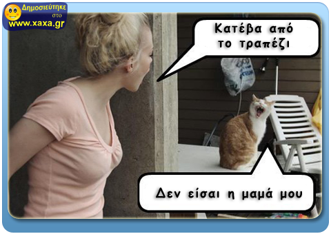 Ζημιάρα γάτα !!