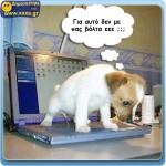 Εκδίκηση σκύλου