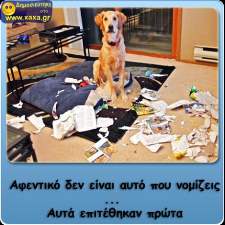 Σκύλος - Δεν είναι αυτό που νομίζεις