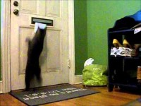 Γάτα περιμένει γράμμα