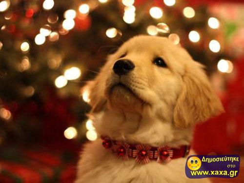 Καλά Χριστούγεννα και καλή χρονία από αυτά τα απίθανα σκυλιά (1)