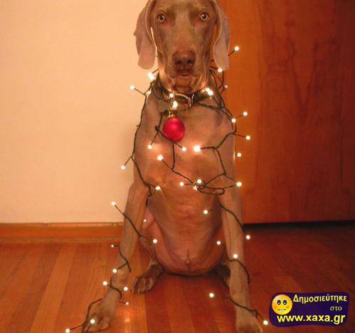 Καλά Χριστούγεννα και καλή χρονία από αυτά τα απίθανα σκυλιά (3)