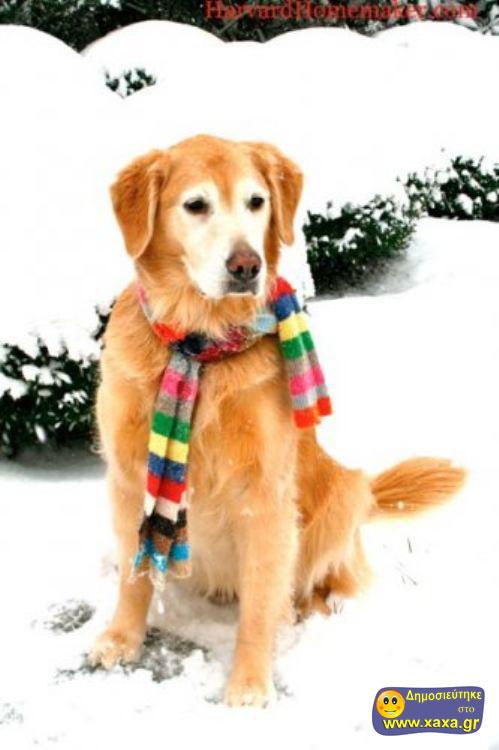 Καλά Χριστούγεννα και καλή χρονία από αυτά τα απίθανα σκυλιά (4)