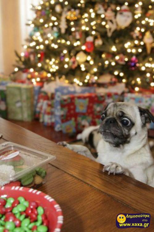 Καλά Χριστούγεννα και καλή χρονία από αυτά τα απίθανα σκυλιά (5)