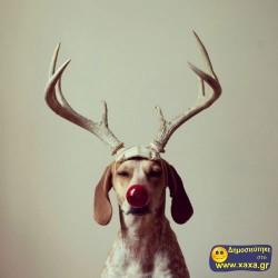 Καλά Χριστούγεννα και καλή χρονία από αυτά τα απίθανα σκυλιά (6)