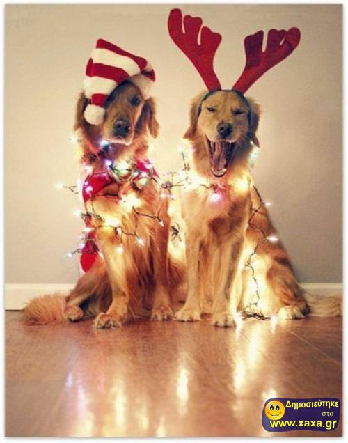 Καλά Χριστούγεννα και καλή χρονία από αυτά τα απίθανα σκυλιά (11)