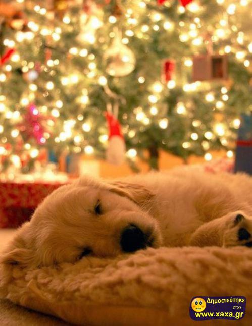 Καλά Χριστούγεννα και καλή χρονία από αυτά τα απίθανα σκυλιά (12)