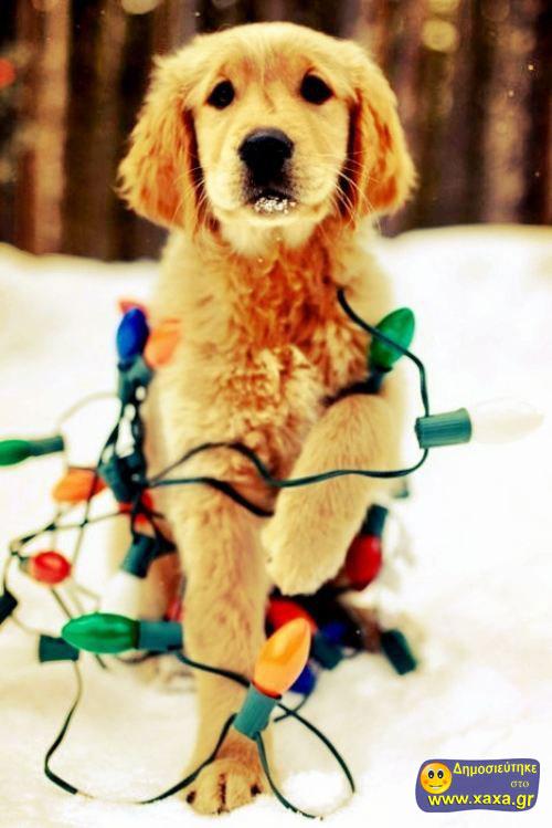 Καλά Χριστούγεννα και καλή χρονία από αυτά τα απίθανα σκυλιά (13)