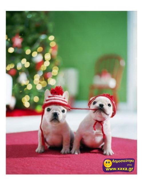 Καλά Χριστούγεννα και καλή χρονία από αυτά τα απίθανα σκυλιά (14)