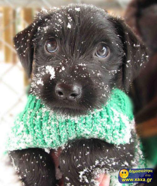 Καλά Χριστούγεννα και καλή χρονία από αυτά τα απίθανα σκυλιά (15)