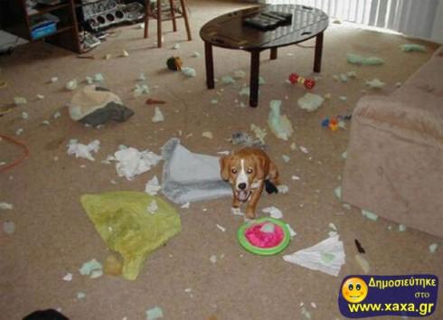 Απίθανοι και αστείοι σκύλοι σε μπελάδες (2)
