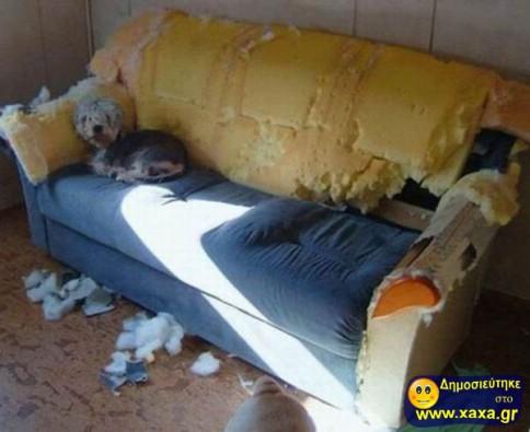 Απίθανοι και αστείοι σκύλοι σε μπελάδες (3)