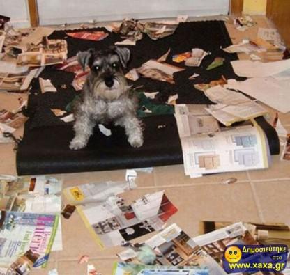 Απίθανοι και αστείοι σκύλοι σε μπελάδες (4)