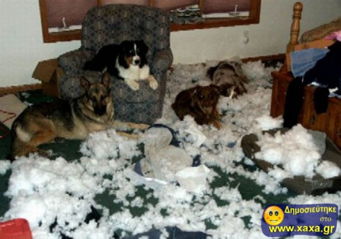 Απίθανοι και αστείοι σκύλοι σε μπελάδες (6)