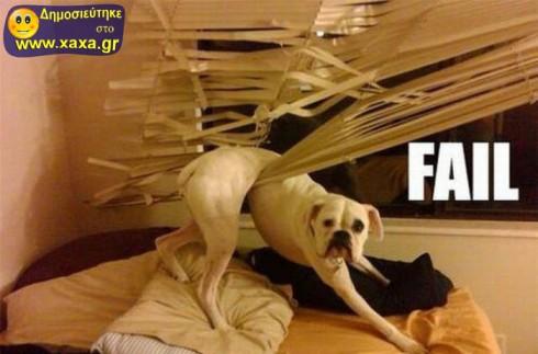 Απίθανοι και αστείοι σκύλοι σε μπελάδες (7)