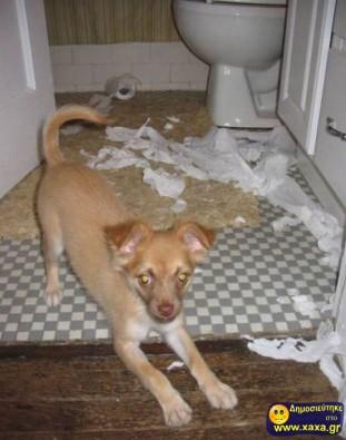 Απίθανοι και αστείοι σκύλοι σε μπελάδες (9)