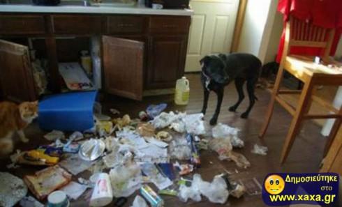 Απίθανοι και αστείοι σκύλοι σε μπελάδες (10)