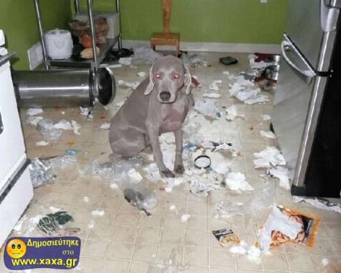 Απίθανοι και αστείοι σκύλοι σε μπελάδες (11)