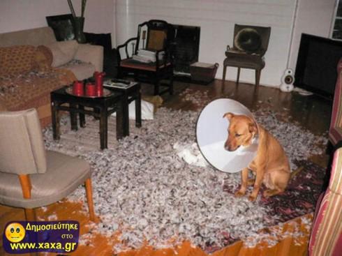 Απίθανοι και αστείοι σκύλοι σε μπελάδες (12)