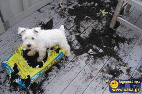 Απίθανοι και αστείοι σκύλοι σε μπελάδες (13)