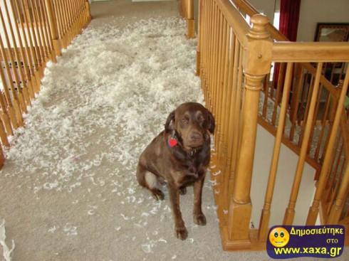 Απίθανοι και αστείοι σκύλοι σε μπελάδες (14)