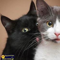 Γάτες σε απίθανες και αστείες φωτογραφίες της κατάλληλης στιγμής (18)