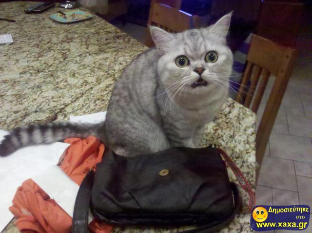 Αστεία απίθανα κατοικίδια και ζώα 16 (4)