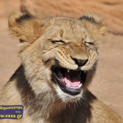 Αστεία απίθανα κατοικίδια και ζώα (33)