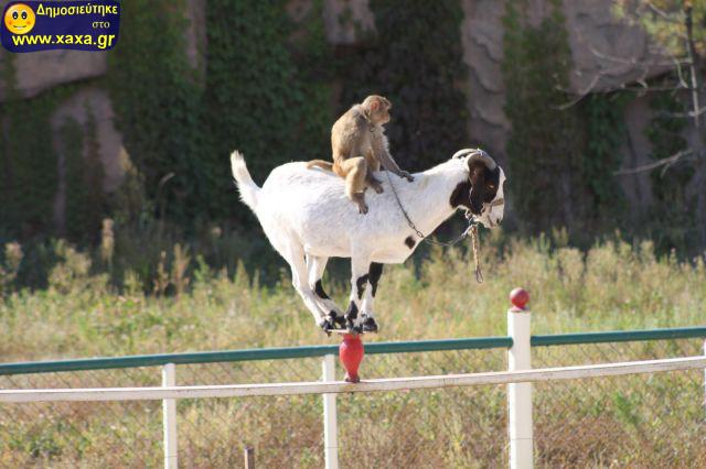 Αστεία απίθανα κατοικίδια και ζώα (4)