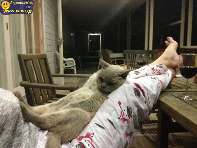Αστεία απίθανα κατοικίδια και ζώα (17)