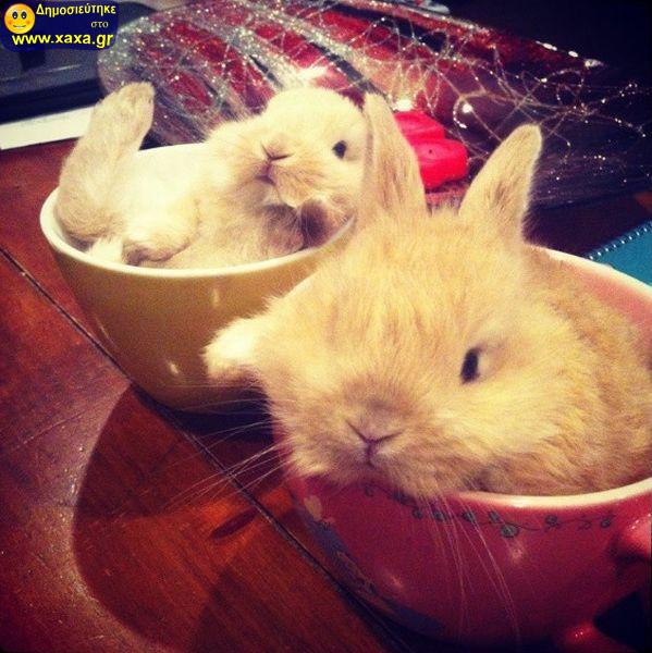 Αστεία απίθανα κατοικίδια και ζώα (9)