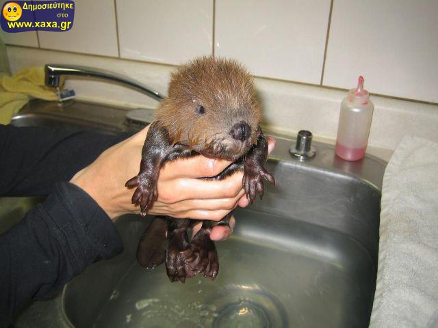Αστεία απίθανα κατοικίδια και ζώα (5)