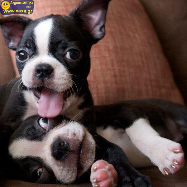 Αστεία απίθανα κατοικίδια και ζώα (7)