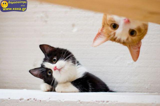 Αστεία απίθανα κατοικίδια και ζώα (10)
