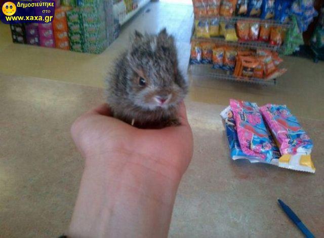 Αστεία απίθανα κατοικίδια και ζώα (15)