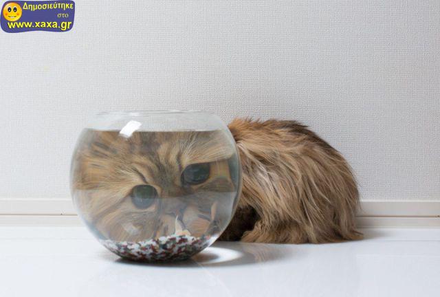 Αστεία απίθανα κατοικίδια και ζώα (1)
