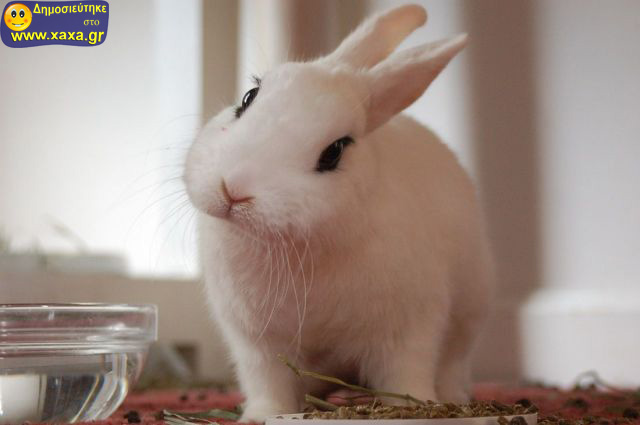 Αστεία απίθανα κατοικίδια και ζώα (20)