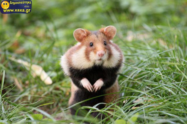 Αστεία απίθανα κατοικίδια και ζώα (3)