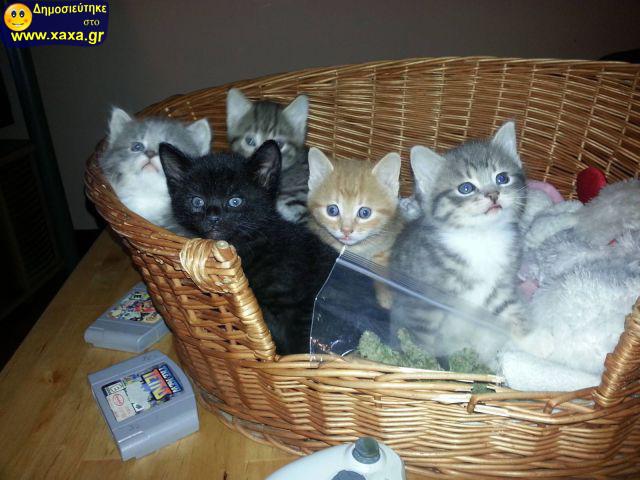 Αστεία απίθανα κατοικίδια και ζώα (6)