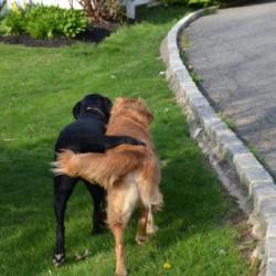Αστεία απίθανα κατοικίδια και ζώα (2)