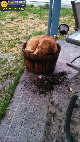 Αστεία απίθανα κατοικίδια και ζώα (14)