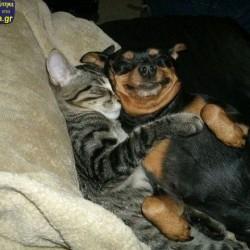 Αστεία απίθανα κατοικίδια και ζώα (12)