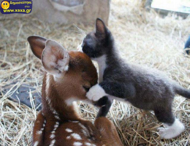 Αστεία απίθανα κατοικίδια και ζώα (13)