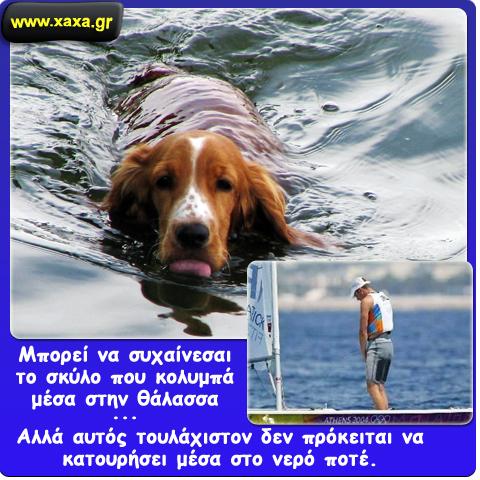 Σκύλος στην θάλασσα ...